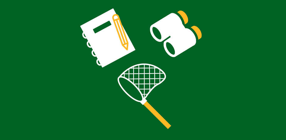 Notebook, butterfly net, and binoculars icon against green background