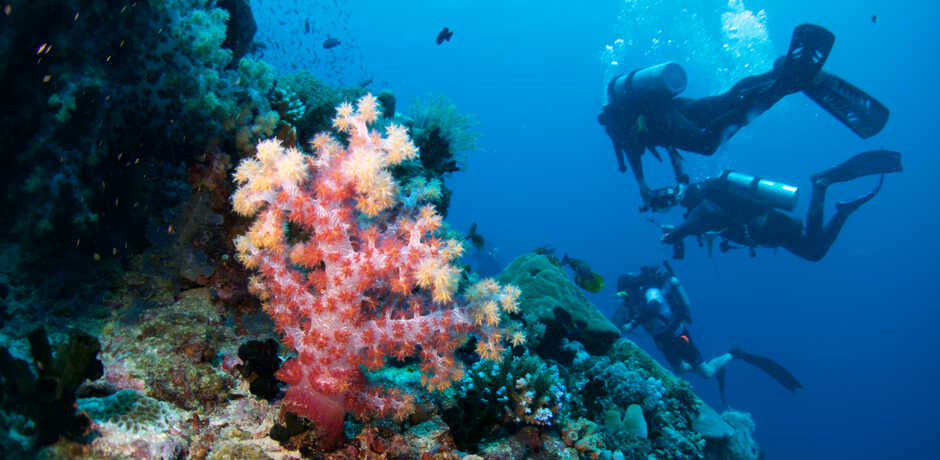 A vivid pink soft coral brightens up a mesophotic reef as Academy divers swim by