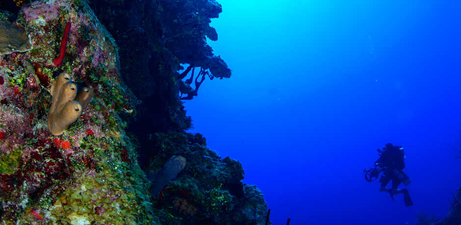 An Academy diver is dwarfed by a giant coral colony in Grand Cayman