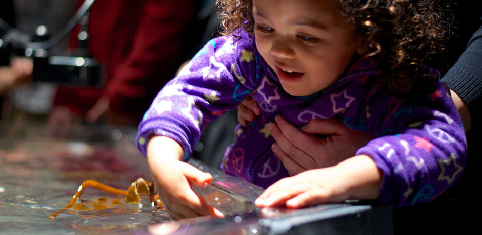 Girl touching kelp in the Academy's discovery tidepool touch tank