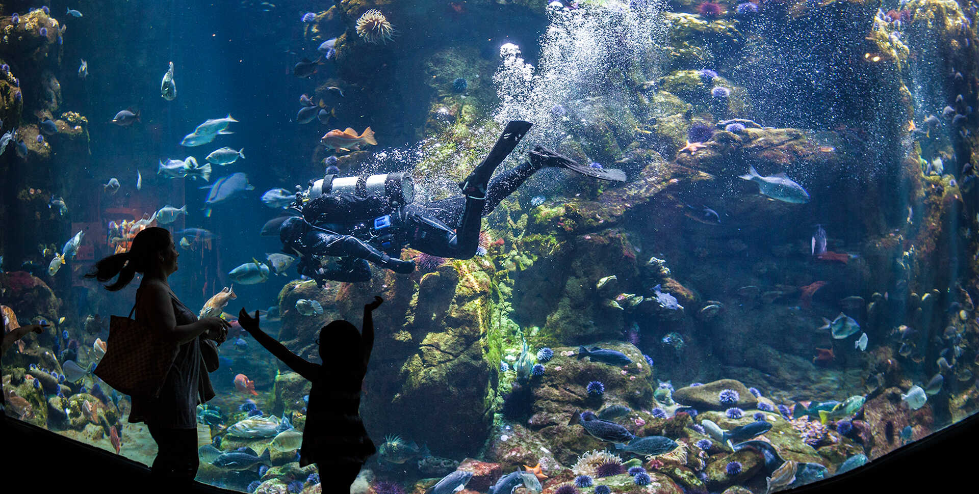 Explore the amazing richness and diversity found in California's coastal waters.
