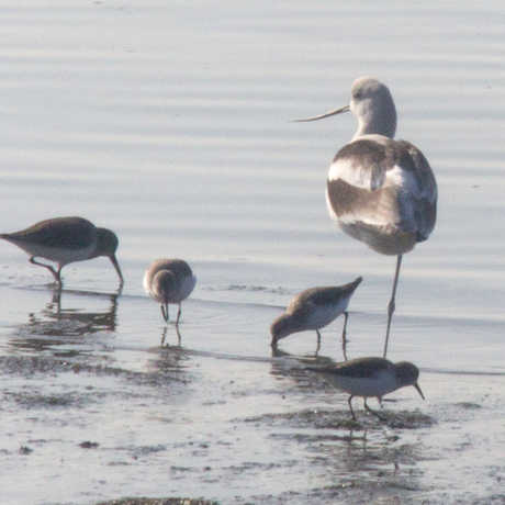 Birds in Middle Harbor, Oakland