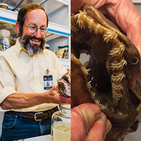 On the left, a photo of Dave smiling and holding up a specimen, on the right a close-up of a frilled shark