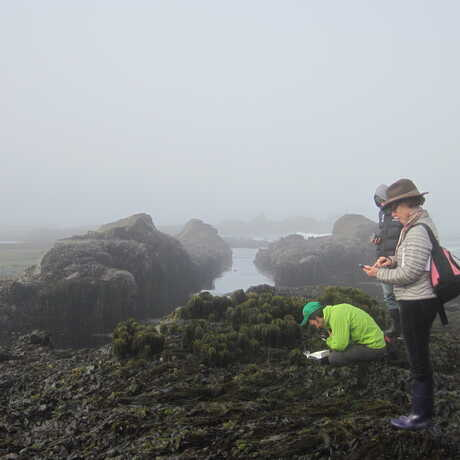 Citizen scientists tidepooling on a foggy day