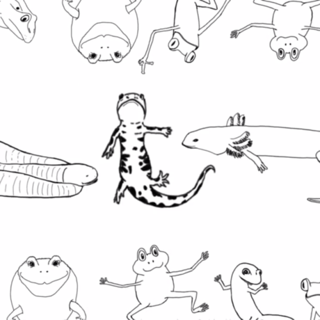 Cute drawings of different kinds of amphibians