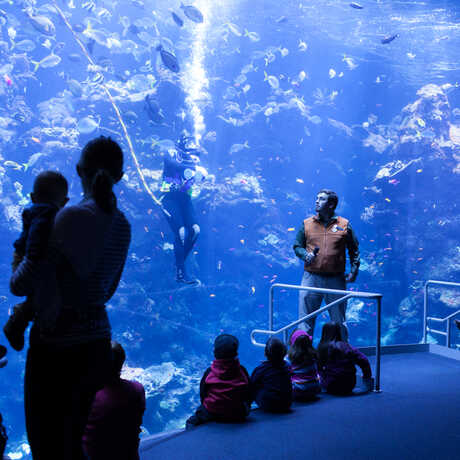 Visitors watch a dive show in the Philippine Coral Reef exhibit.