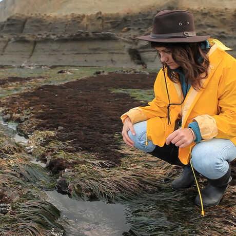 A Summer Systematics Institute intern surveys a tidepool.