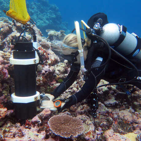 Marine biologist Rebecca Albright conduct underwater research on a coral reef