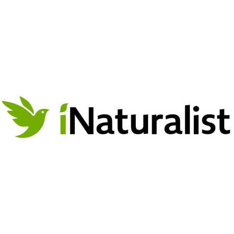 iNaturalist logo and wordmark