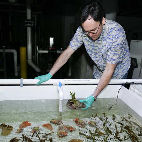 Bart Shepherd working with corals.