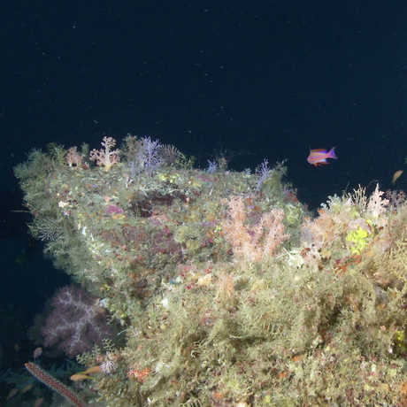 "A deep-sea reef in the ""twilight zone"""