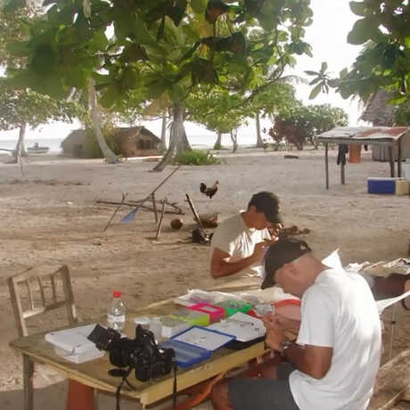 Dumbacher and team work at bench on a Papua New Guinea beach