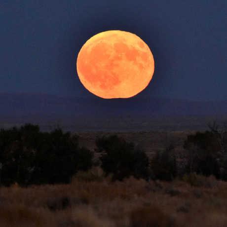 Big orange harvest moon