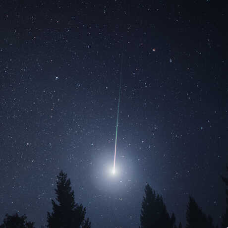 Striking image of Leonid fireball in night sky over tall trees