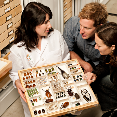 Academy scientist showing beetle specimens to tour guests