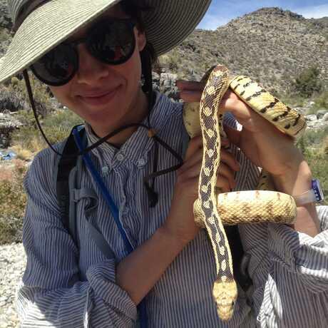 Lauren gopher snake