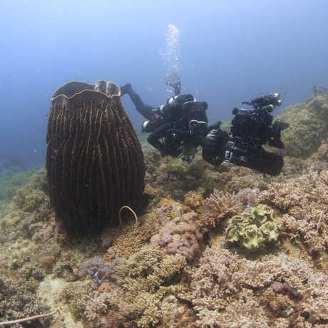 Elliott Jessup on a Philippines twilight zone dive