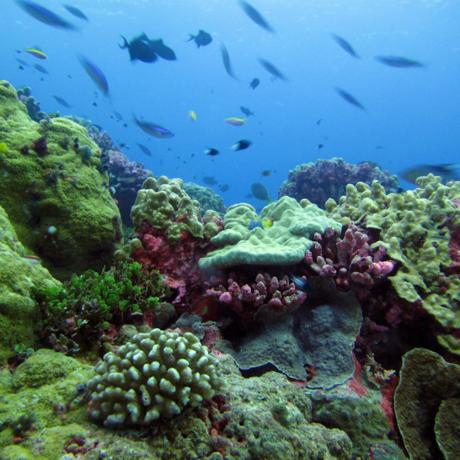 Coral reefs near Enderbury Island, Kiribati