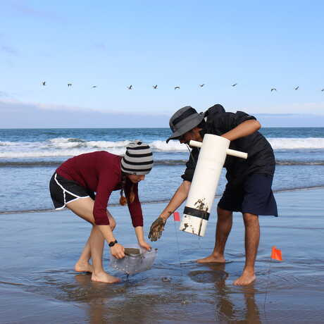 2 students use a digging tool to collect sand crabs at the beach