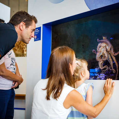 Guests observe a day octopus in Color of Life exhibit