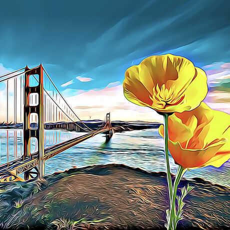 San Francisco Bay Area City Nature Challenge, April 30 - May 3, 2021
