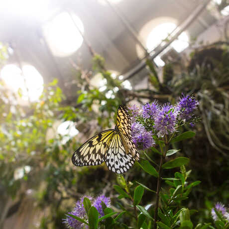 A butterfly rests on a leaf inside the rainforest dome.