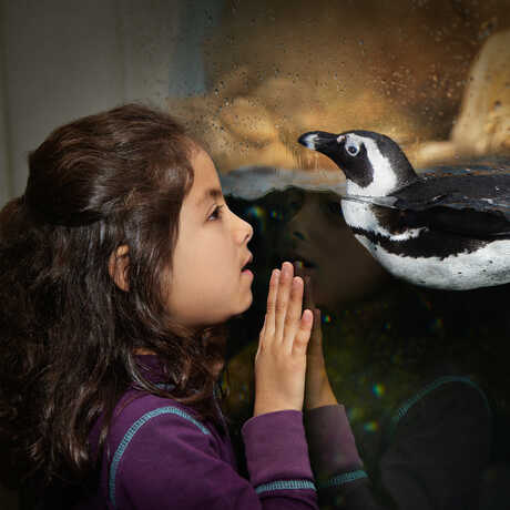 A girl and a penguin come face to face