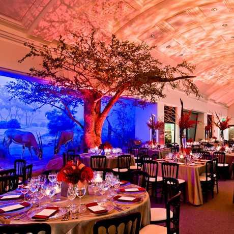 Wedding reception in African Hall