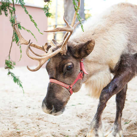 Two antlered reindeer at the Academy