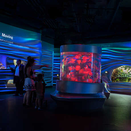 The Water Planet exhibit's blue glow creates a beautiful place for exploring watery adaptations.
