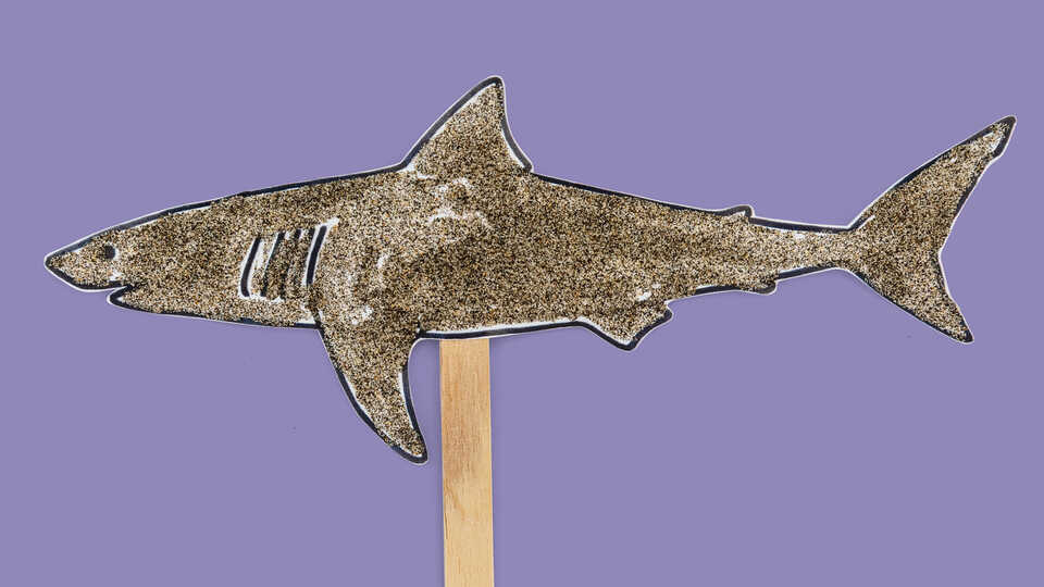 Craft of shark on a popsicle stick