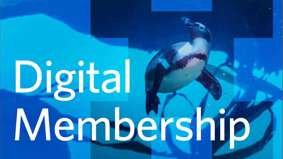 Web hero image for Digital Membership with underwater photo of penguins