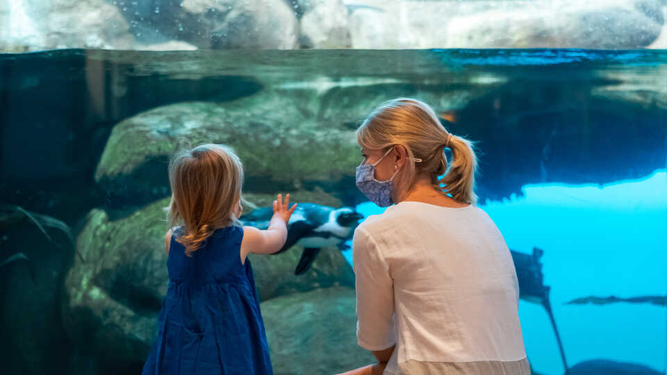 Masked mother and toddler daughter look at African penguins