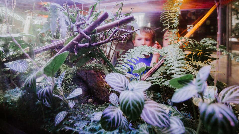 2 boys peer into an exhibit in the Academy rainforest
