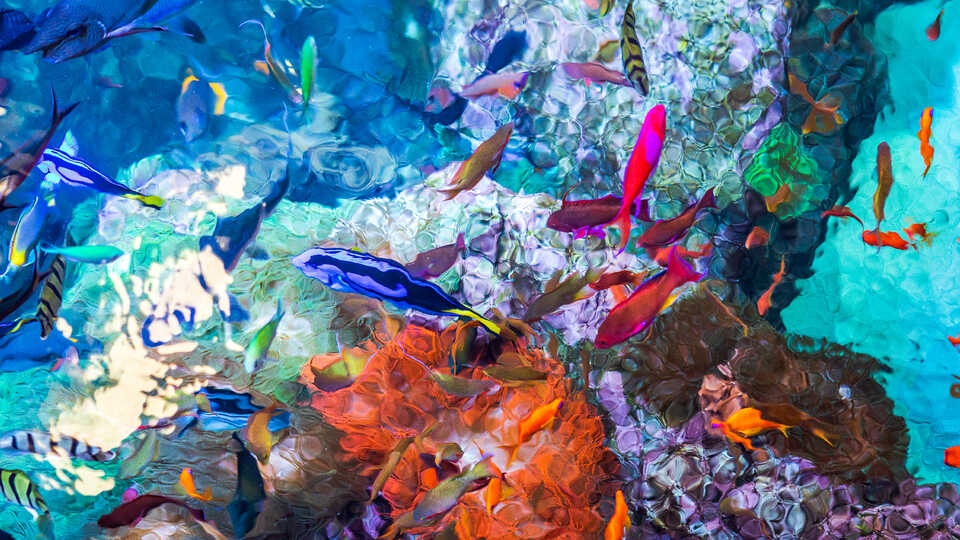 Aerial shot over Reef Lagoon exhibit with colorful coral reef fish and coral under the surface