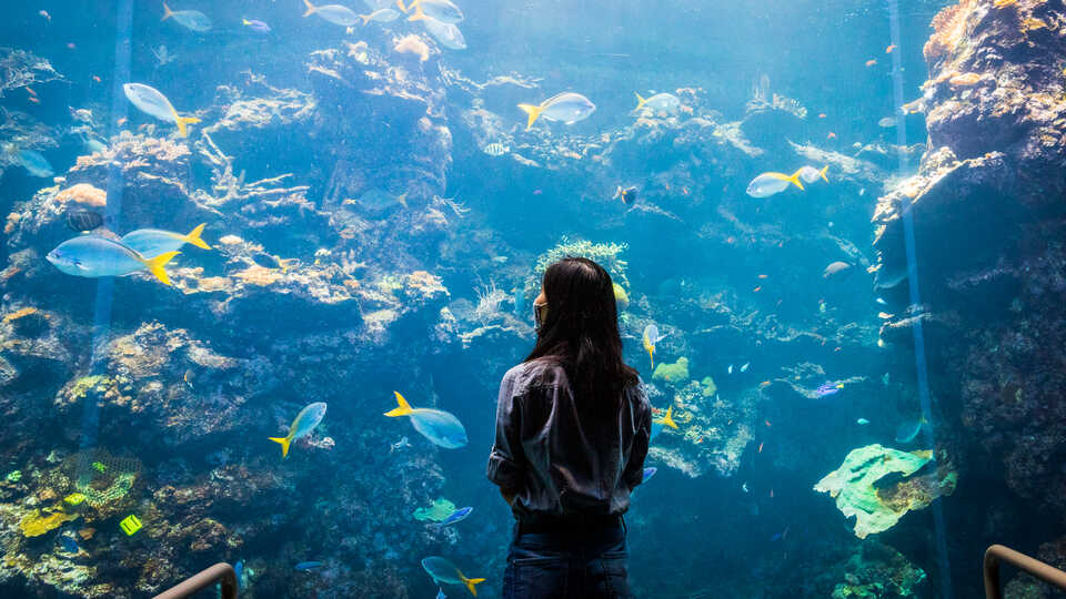 A masked guest gazes at the enormous Philippine Coral Reef exhibit