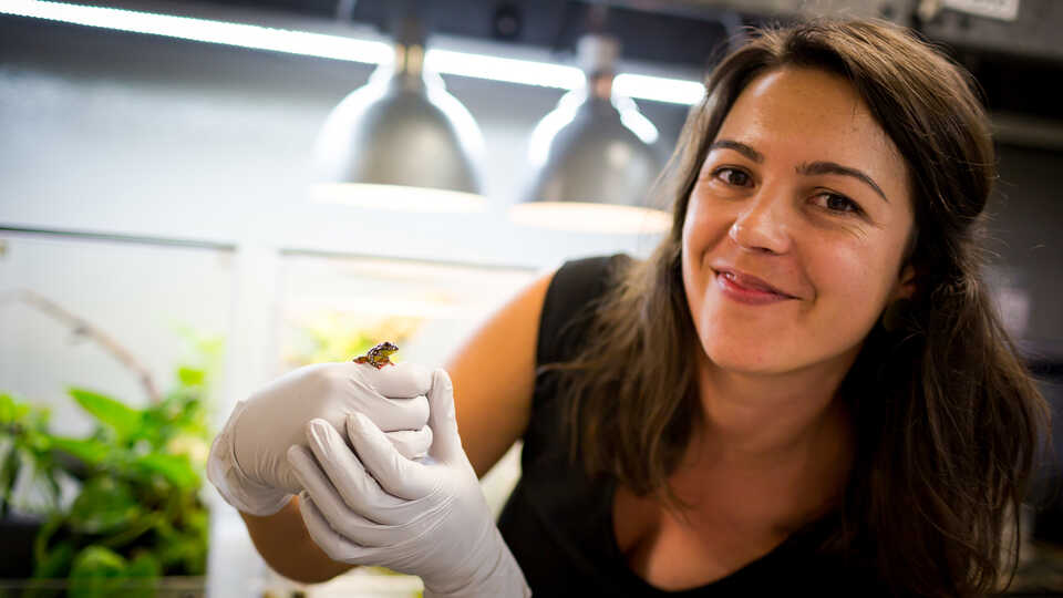 Rayna Bell holding a small tree frog in her lab