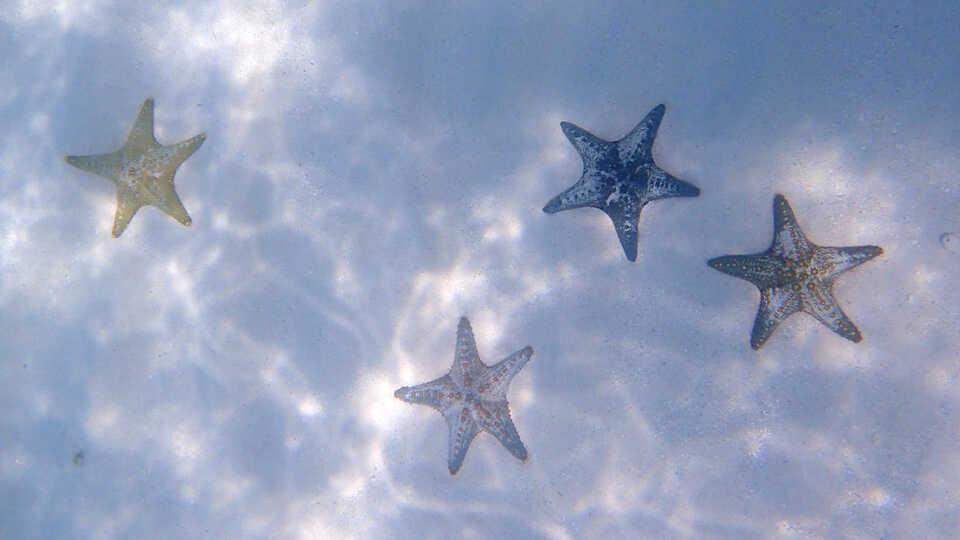 Underwater photo of multicolored sea stars in Zanzibar